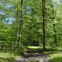 route forestière dans la forêt domaniale de Lisle